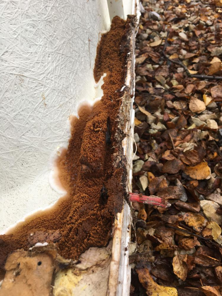 Dry rot on a bathtub